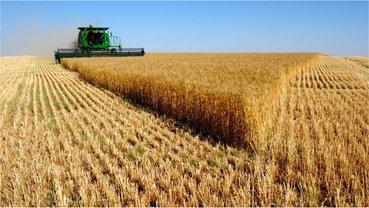 Украинские аграрии наращивают экспорт в Европу - фото 1