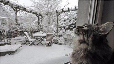Снег будет идти целый день - фото 1