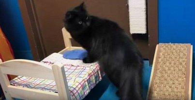 У котов пояились новые спальные места - фото 1