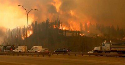 Лесные пожары становятся всё масштабнее   - фото 1