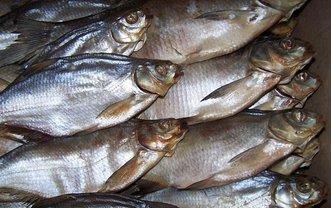 Следователи установят виновных в попадании отравленной рыбы на прилавки - фото 1