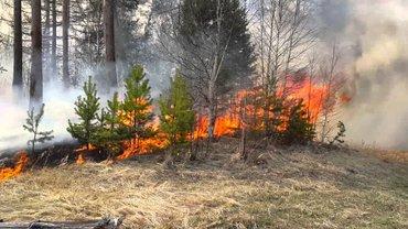Спасатели до сих пор тушат пожар - фото 1
