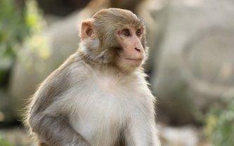 Маленькая обезьянка взорвала соцсети смешными фото - фото 1