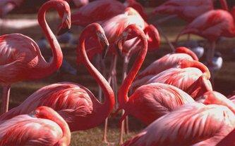 В Украину прилетели розовые фламинго - фото 1