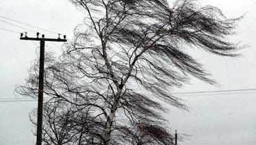 Сильный ветер надвигается на запад Украины  - фото 1