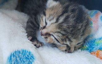 Бетти Би - котенок с двумя мордочками - фото 1