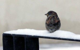 В Украине снегопад и дожди завершаются с приходом похолодания и морозов - фото 1
