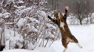 В Украине в Новогоднюю ночь можно ждать мороз и снег - фото 1