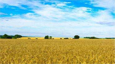 Земельный вопрос до сих пор остается не решенным - фото 1