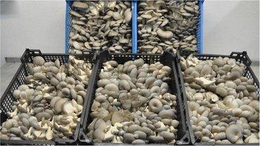 Франции доставили радиоактивные грибы - фото 1