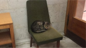 Кот Амбассадор поселился в украинском МИДе - фото 1