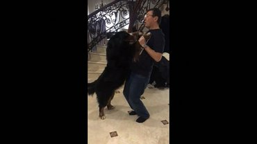 Луценко станцевал со своей собакой - фото 1
