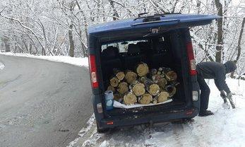 Неизвестные срубили дерево в дендропарке Киева - фото 1