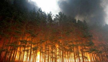 В Луганской области горят 5 гектаров леса - фото 1