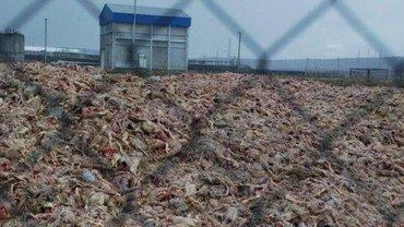 Владельцы крупнейшего агрохолдинга вышли на свободу по скидке от судей - фото 1