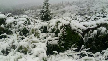 В Карпатах выпал снег - фото 1