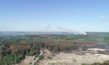 Пожар вблизи ЧАЭС потушен - фото 1