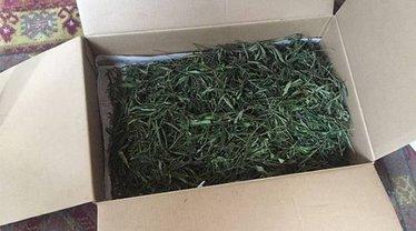 В Ивано-Франковской области у мужчины нашли марихуаны на полмиллиона - фото 1