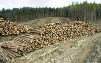 Что не так с принятым Радой законом о контрабанде леса? - фото 1
