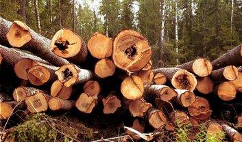 Австрия выступила против запрета на экспорт леса - фото 1