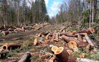 В Киеве сняли масштабную вырубку леса - фото 1