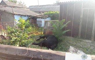 В Николаевской области не могли усмирить напавшего на людей быка - фото 1