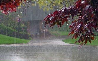 Погода на выходных в Украине: местами грозы и сильные ливни - фото 1
