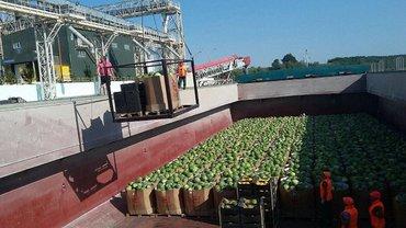 В Киев сегодня привезут тонны арбузов - фото 1
