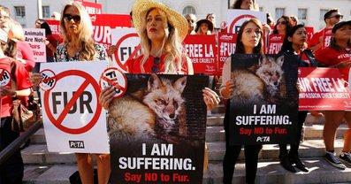 Лос-Анджелес запретит продавать натуральный мех - фото 1