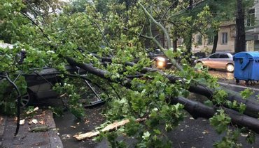 В Одессе ветер повалил 38 деревьев - фото 1