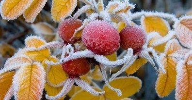 В ближайшие дни в Украине ожидаются заморозки - фото 1
