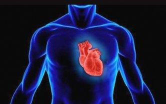 Всемирный день сердца проводится 29 сентября - фото 1