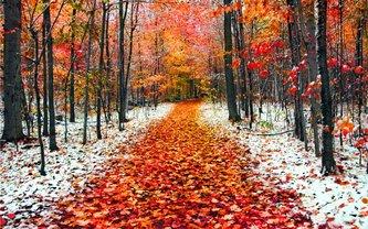 Ноябрь приготовил для украинцев первые заморозки и мокрый снег - фото 1