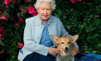 У королевы Елизаветы II умер последний корги - фото 1