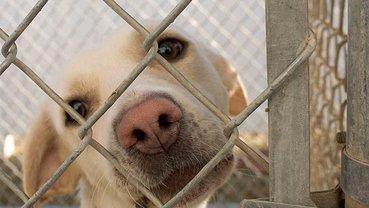 В Южной Корее закрыли крупнейшую в стране бойню собак - фото 1