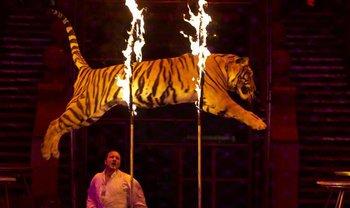 Кабмин поддержал запрет животных в цирке - фото 1