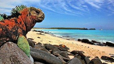 На Галапагосских островах запретили фейерверки, чтобы не вредить природе - фото 1