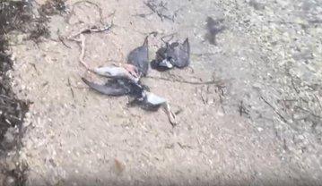 Весь берег моря усыпан трупами: крымчане в панике из-за обрушившейся на них беды (ФОТО) - фото 1