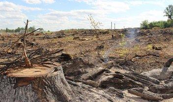 В Днепропетровской области вырубили 100-летние дубы - фото 1