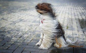 В Украине ждут порывы ветра до 30 м/с - фото 1