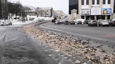 В России на дорогу выбросили тонны рыбных отходов - фото 1