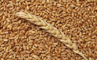 Украина может понести колоссальные убытки из-за срыва поставок зерна в Китай - фото 1