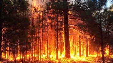Под Чернобылем горит лес, в небо поднялась авиация  - фото 1