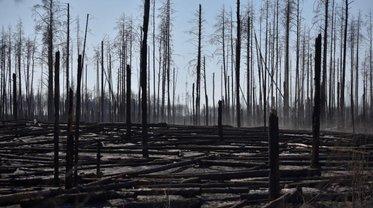В Чернобыльской зоне и Житомирской области продолжаются масштабные пожары - фото 1