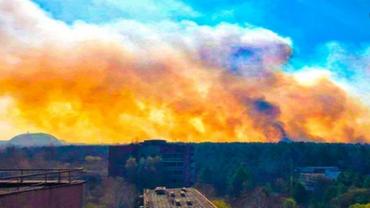 Пожары уничтожили 5 % Чернобыльского заповедника: Раскрыты детали - фото 1