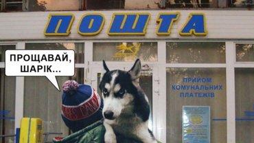 """Минюст продает собак за долги"": Малюська отреагировал на скандал - фото 1"