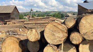 IKEA проверит, как к ним попадал незаконно срубленный в Карпатах лес - фото 1