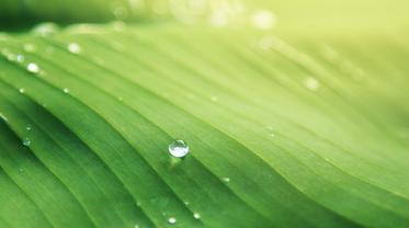 Топ-3 способа улучшить микроклимат дома - фото 1