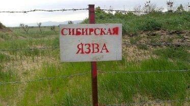 В Одесской области зафиксировали заражение сибирской язвой - фото 1