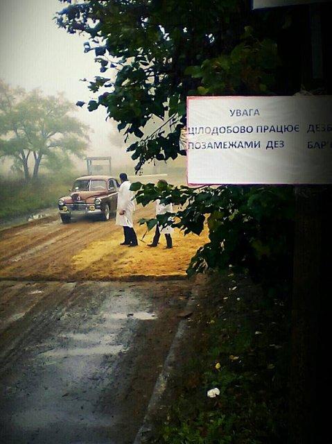 В Луганской области вспышка африканской чумы свиней - фото 15417